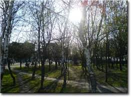 Картинки и и реферат про весну Сюрприз Картинки и и реферат про весну