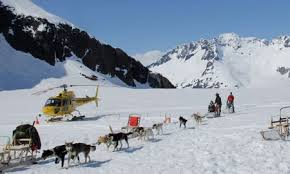 juneau dog sledding tour 524