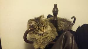 Cat Coat Rack Entryway coat rack Album on Imgur 51