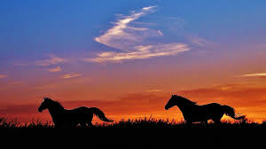 wild horses sunset. Fine Wild Horses Photograph  Wild Running In A Kansas Sunset By Greg Rud Intended H