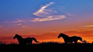 wild horses sunset.  Horses Horses Photograph  Wild Running In A Kansas Sunset By Greg Rud Intended R