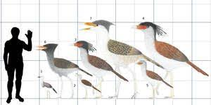 Bird Size Chart Terror Bird Cousins By Cefal27 Cenozoic Archosaurs Incl