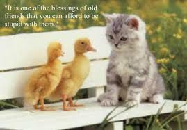 cute animals quotes. Unique Cute Sweet Animal Quote U2013 One Of The Blessings Old Friends That You Can  Afford To Be Stupid With Them Intended Cute Animals Quotes T