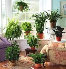 small decorative indoor plant pots house plants interior decorating ideas  and home fern room 9 in