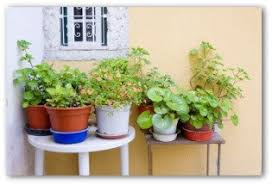 Small Picture Basic Container Garden Designs