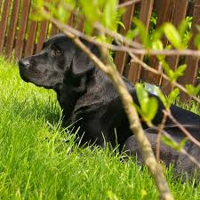 10 plants poisonous to dogs