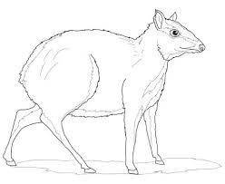 Deer Pictures To Print Coloring Pages Halloween Disney For Girls