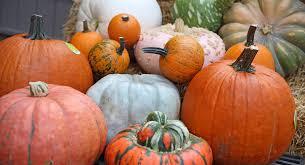 pumpkins at prairie gardens champaign il