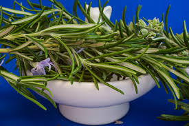 free images flower aroma food mediterranean produce vegetable season cook rosemary medicinal plant culinary herbs kitchen e kitchen herb