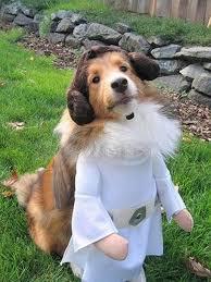 chewbacca dog costume diy clublilobal com
