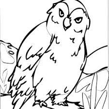 Small Picture Owls Coloring Pages Big Eyed Owl Page adult
