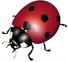 En Couleurs Imprimer Animaux Insectes Coccinelle Num Ro 158408