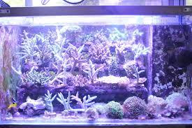 36 Aquarium Light 2018 Top Seller Wifi Control Light Sunrise Sunset Coral Reef Led Aquarium Light 16 24 36 48 80cm 100cm 120cm Wholesale Buy 100cm Led