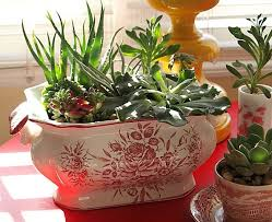 How To Make A Indoor Succulent Dish Garden - Bring the green to your dinner  table