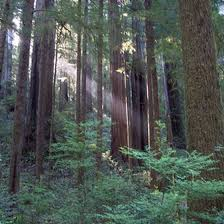 With almost 400 campgrounds and rv parks across california, reserveamerica.com can help you discover the pacific coast, towering redwoods, or the stunning landscapes of the golden state. Redwood National Park Activities