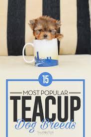 15 por teacup dog breeds