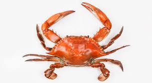 Crab Species Chart Maryland Crabs A Guide To The East Coasts Essential Summer