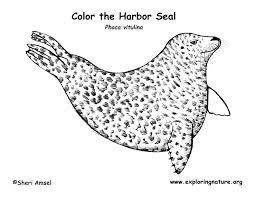 Small Picture Seal Harbor Coloring Page
