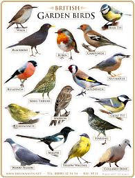 Bird Identification Chart 5 More Things Americans May Not Know About England Crystal