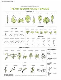 Herb Root Depth Chart Online Introductory Herbal Course Lesson Preview