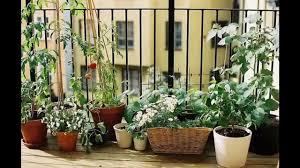 Vegetable Garden Ideas For Apartments Home Design