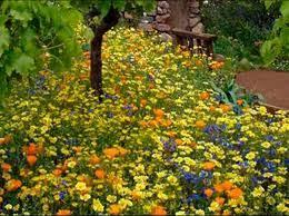 <b>Цветочный</b> газон