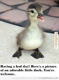 FunnyMemes.com • Cute memes - [Having a bad day?] via Relatably.com