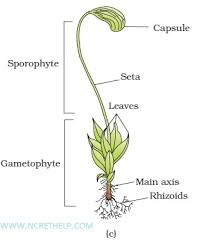 23 Thorough Plant Kingdom Classification Chart For Kids