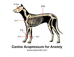 Canine Acupressure For Anxiety