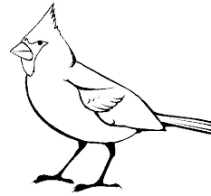 Small Picture Cardinal coloring page Coloringcrewcom