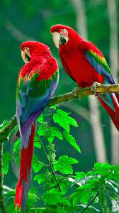 Birds Wallpaper HD for mobile free ...