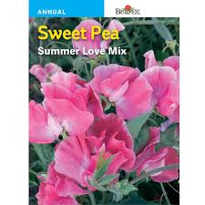 bur sweet pea summer love mix seed