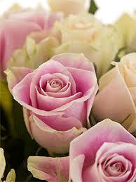 <b>Букет</b> из роз «Нежный <b>дуэт</b>» - купить с бесплатной доставкой в ...