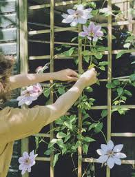 Best Climbing Flowers For Spring  About The Garden MagazineWall Climbing Plants In Pots