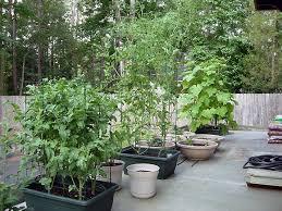 container garden vegetables. Vegetable Container Gardening Ideas Garden Vegetables F