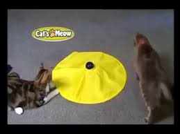 cats meow toy cats love get cats meow toy as seen on tv