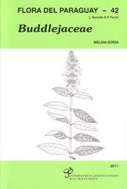 Flora del Paraguay, Volume 42: Buddlejaceae | NHBS Academic ...