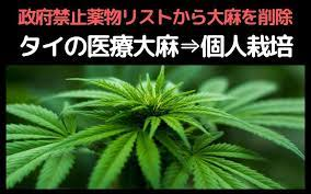 タイ 大麻 合法