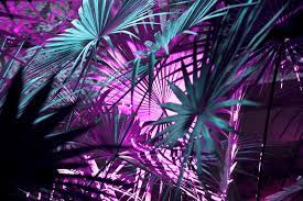 Search free 4k wallpapers on zedge and personalize your phone to suit you. Purple Wallpapers Free Hd Download 500 Hq Unsplash