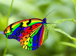 most beautiful butterflies in the world flying. On Most Beautiful Butterflies In The World Flying