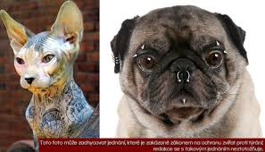 Zvířecí Tetování A Piercing Proč Lidé Mučí Psy A Kočky Kvůli Kráse