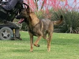 smart dog breed selector