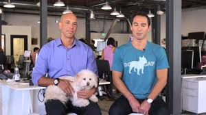 DogVacay Disaster Relief Program: Introduction - YouTube