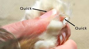 clipping cats nails