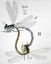 Antique Wall Chart Insects By Rudolf Leuckart 1879