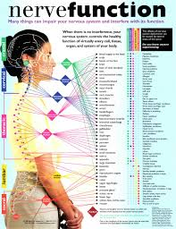 Bloomington Spine Clinic Nerve Function Chart Bloomington Il