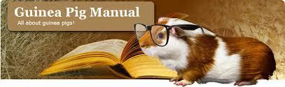 Guinea Pig Urine Chart Guinea Pig Health The Guinea Pig Manual