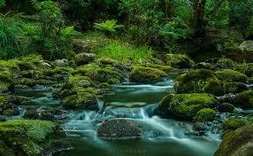 Картинки по запросу photo australia and new zealand nature