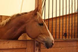 equine major cal horse insurance kay cas insure horses