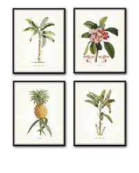 on tropical wall art sets with vintage tropical plant prints offsider company